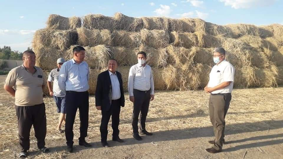 Қызылорда: Шаруаларды шөппен қамтамасыз етуге еріктілер атсалысуда