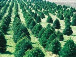 Қызылорданың жасыл белдеуі 135 мың түп ағашпен толықты