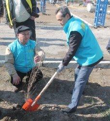 Тазалық айлығы аясында қазалылықтар 2500 түп ағаш отырғызды
