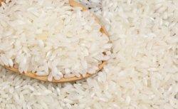 Сыр бойында жиналған дәнді дақылдардың 98,7% пайызын күріш құрайды