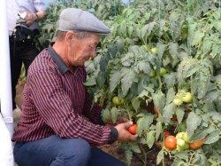 Қызылорданың агроөнеркәсіп кешенін дамытуға шетелдік инвесторлар да ынталы