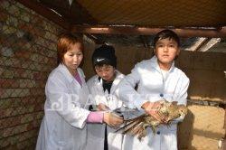 Қызылордадағы мектеп құстардың түр-түрін асырайды